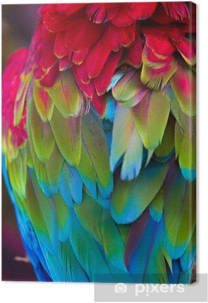 Canvastavla Blå, röda och gröna macawfj - Djur