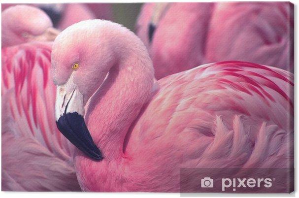 Canvastavla Chilenska Pink Flamingo - Djur