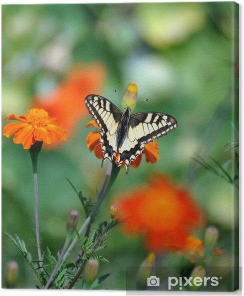 Canvastavla Fjäril på blomman - Djur