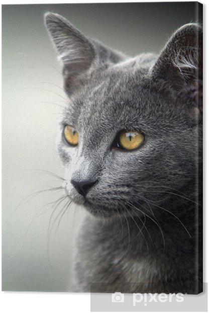 Grå katt