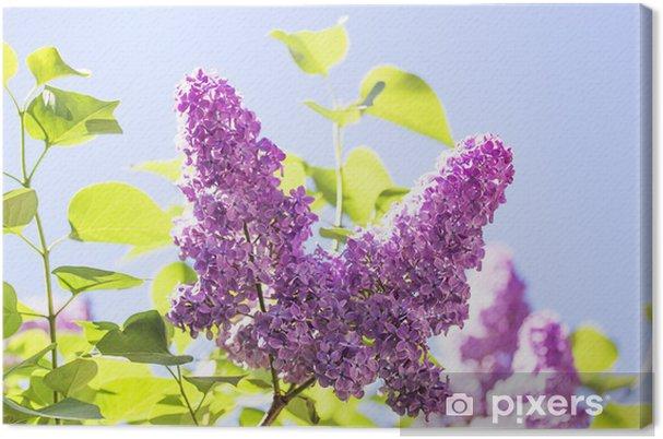 86e0261feb15 Canvastavla Gren med fjäder lila blommor • Pixers® - Vi lever för ...
