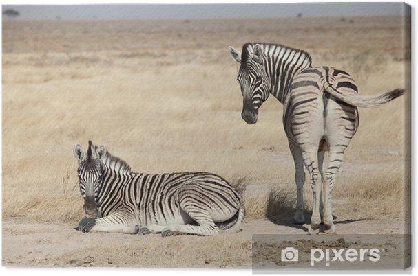 Canvastavla Grupp av zebra - Teman