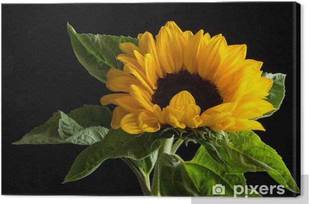 Canvastavla Gul blomma - Jordbruk