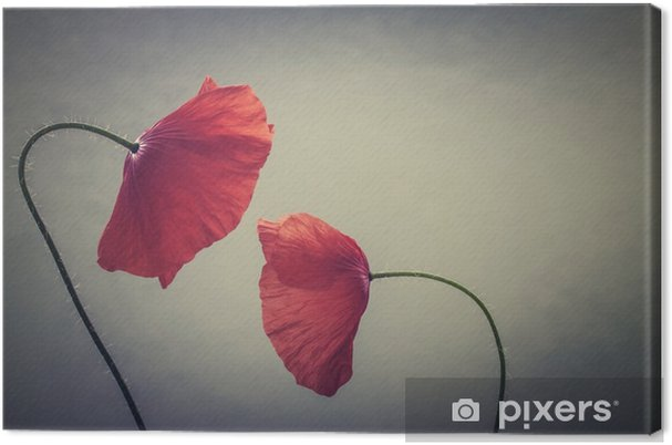 Canvastavla Konst vallmo - Växter & blommor