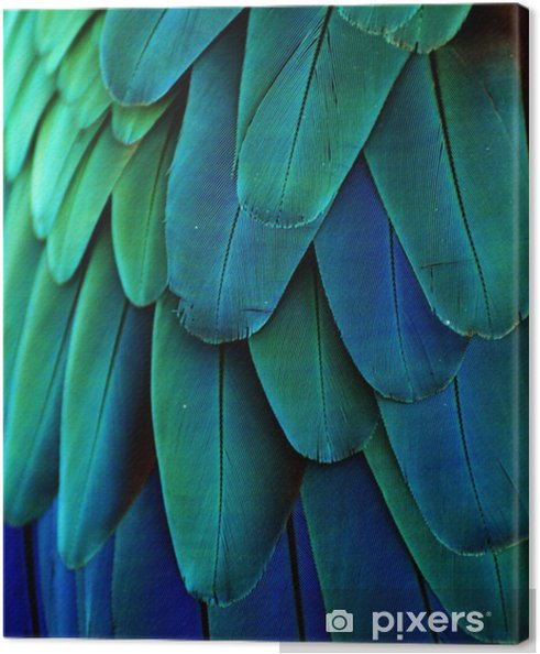 Canvastavla Macawfj (blå / grön) - iStaging