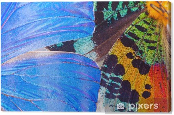 Canvastavla Mångfärgade fjärilar vinge - Djur