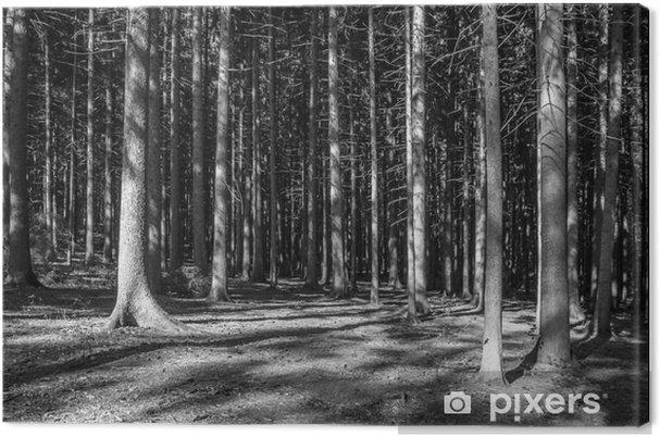 Canvastavla Nadelwald Monochrom - Landskap