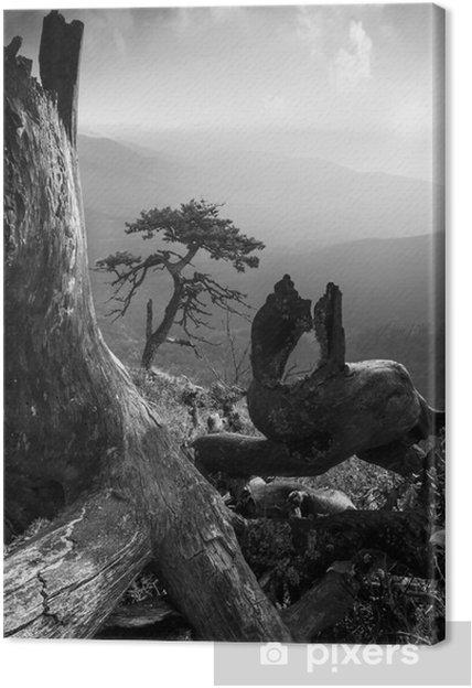 Canvastavla Pinetree på en monuntain kulle. Svartvitt - Landskap