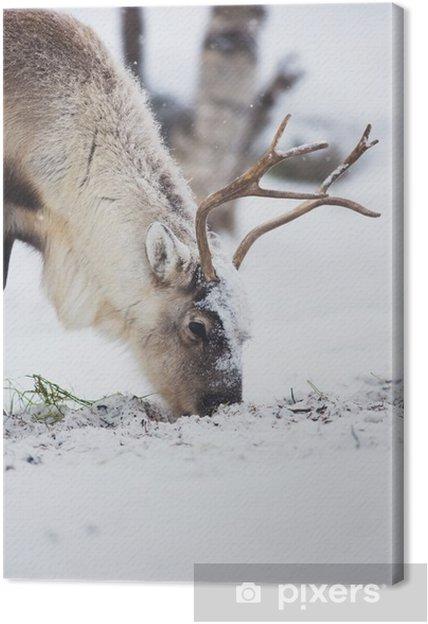 Canvastavla Ren äta gräs i en vinter skog - Teman