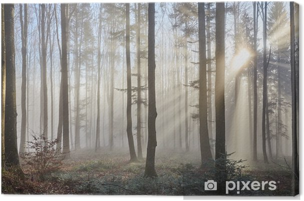Canvastavla Solen strålar genom dimmig skog - Teman