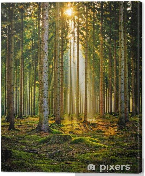 Canvastavla Sonnenstrahlen im Nadelwald im Morgennebel - Landskap
