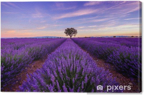 Canvastavla Träd i lavendel fält på soluppgången i Provence, Frankrike - Landskap