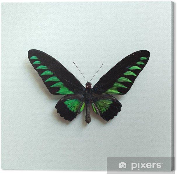Canvastavla Tropisk fjäril - Djur