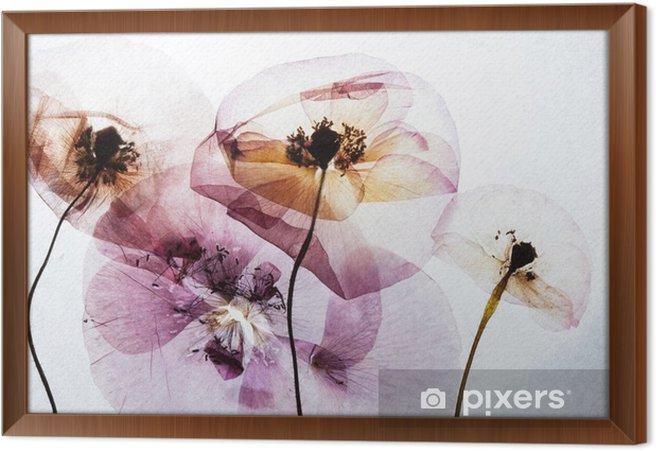 Çerçeveli Tuval Kuru gelincikler - Çiçek ve bitkiler