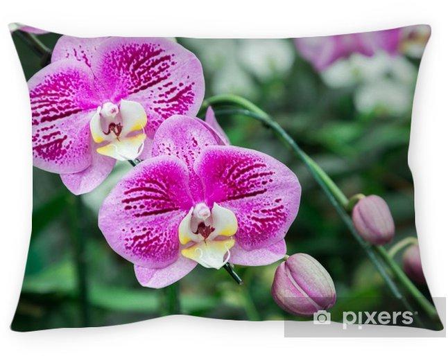 Cojín decorativo Flor de la orquídea en jardín de la orquídea en el invierno o el día de primavera para el diseño de concepto de la idea de la belleza y de la agricultura de la postal. phalaenopsis orchidaceae. - Plantas y flores