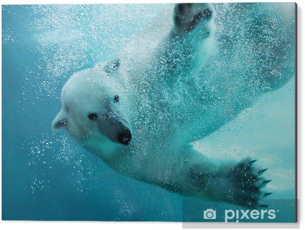 Cuadro en Dibond Oso polar bajo el agua ataque - Temas