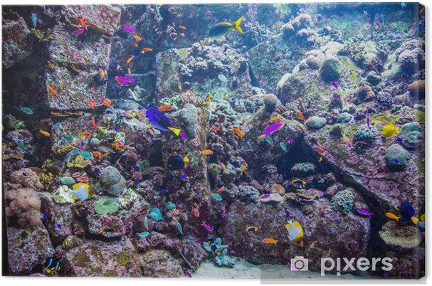 Cuadro en Lienzo Acuario de peces tropicales en un arrecife de coral - Arrecife de coral