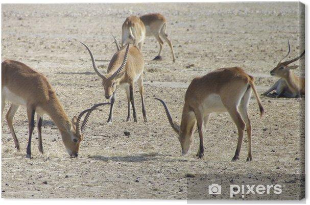 Cuadro en Lienzo África salvaje - Mamíferos