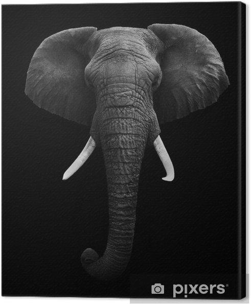 Cuadro en Lienzo African Elephant - Aislado - Estilos