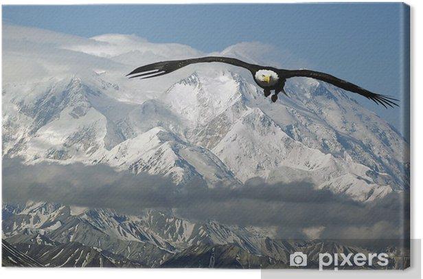 Cuadro en Lienzo Águila calva en las montañas - Temas