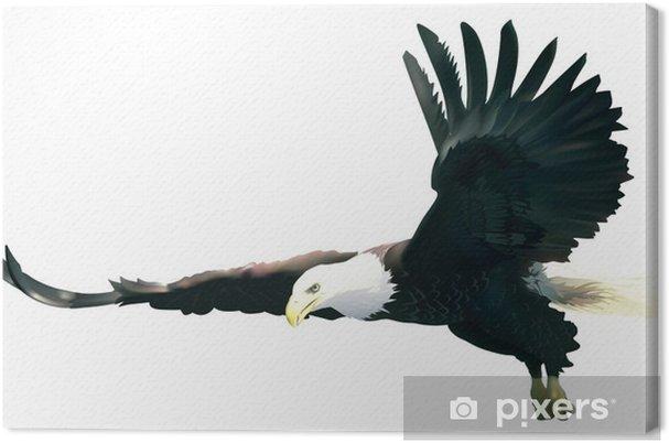Cuadro en Lienzo Águila calva - ilustración de color • Pixers ...