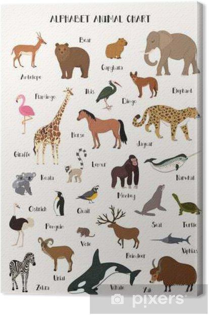 Cuadro en Lienzo Alfabeto animal conjunto gráfico para los niños - Animales