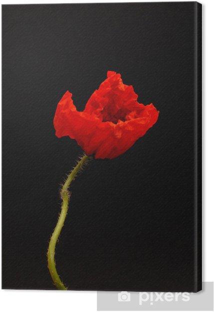 Cuadro en Lienzo Amapola - Flores