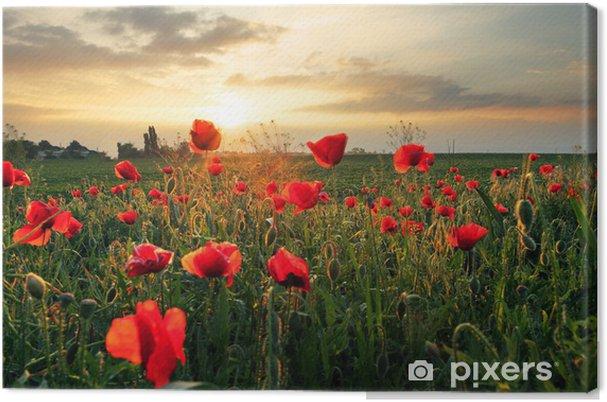 Cuadro en Lienzo Amapolas flor de campo en la puesta del sol - Temas