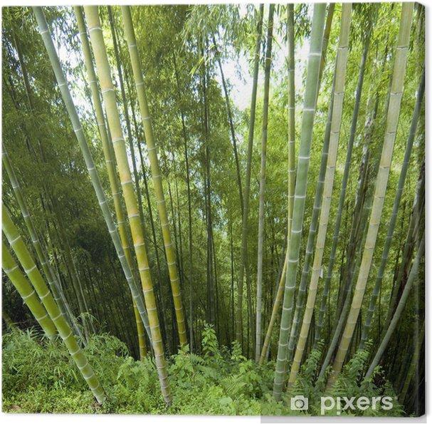 Cuadro en Lienzo Antecedentes de bambú - Europa