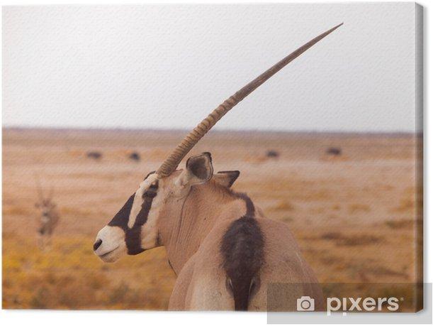 Cuadro en Lienzo Antílope oryx - África