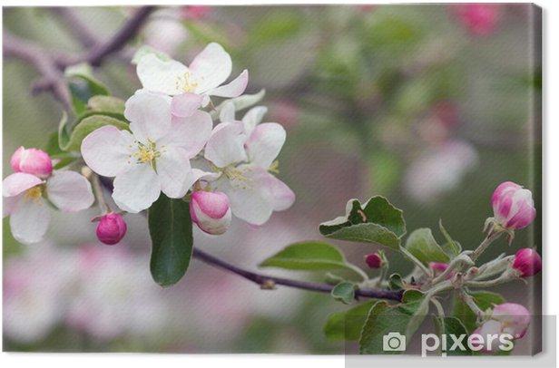 Cuadro en Lienzo Apple blossom - Manzanos