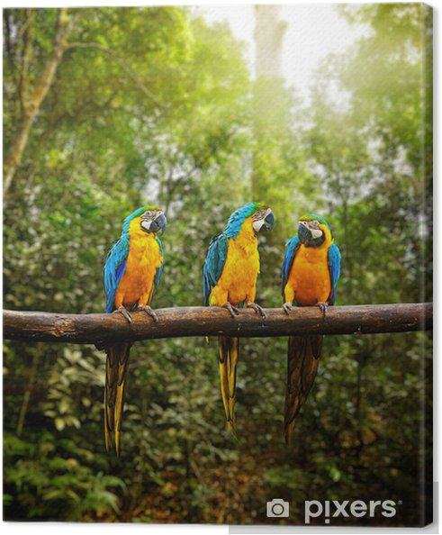 Cuadro en Lienzo Ararauna azul y amarillo Guacamayo Ara en el bosque - Temas