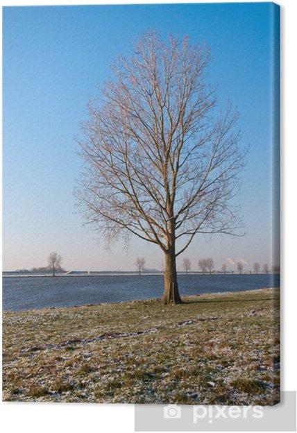 Cuadro en Lienzo Árbol solitario Bare sobre un río en los Países Bajos - Tristeza