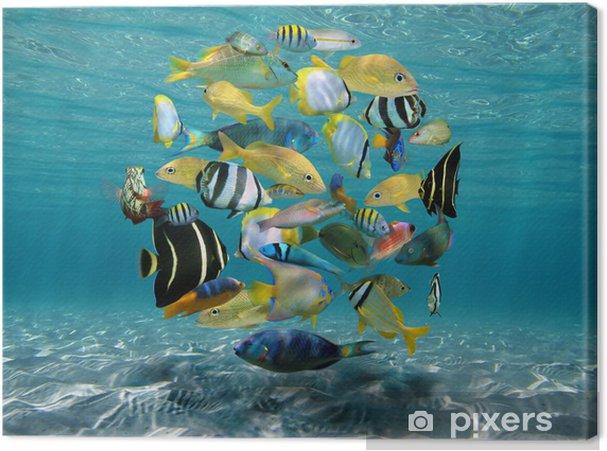 Cuadro en Lienzo Banco de peces por encima de un fondo de arena - Temas