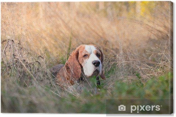 Cuadro en Lienzo Beagle en el bosque - Mamíferos