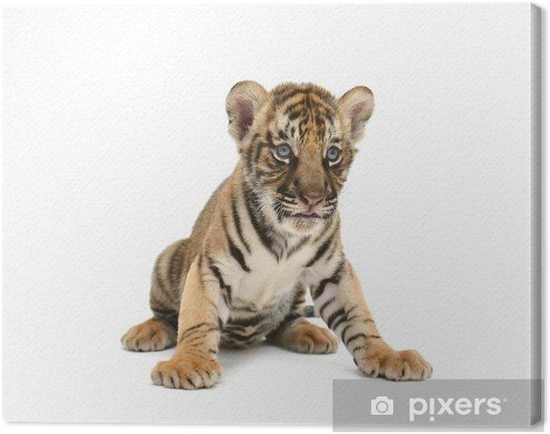 Cuadro en Lienzo Bebé del tigre de Bengala - Vinilo para pared