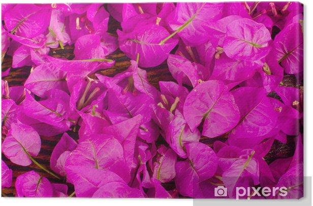 Cuadro en Lienzo Bougainvillea flores - Fondos