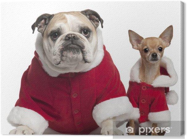 Cuadro en Lienzo Bulldog Inglés y Chihuahua en trajes de Santa que se sienta - Mamíferos