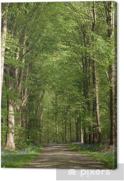 Cuadro en Lienzo Camino en el bosque - Árboles