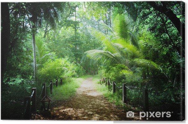 Cuadro en Lienzo Camino en la selva de las islas Seychelles - Naturaleza