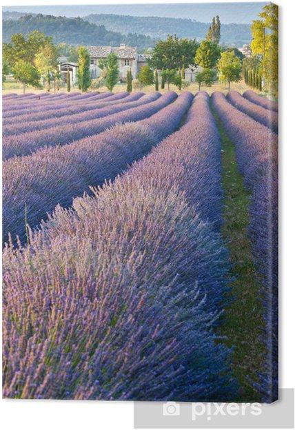Cuadro en Lienzo Campo de lavanda en Provence -