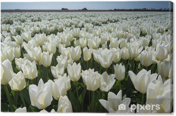 Cuadro en Lienzo Campo de tulipanes con un cielo azul - Flores