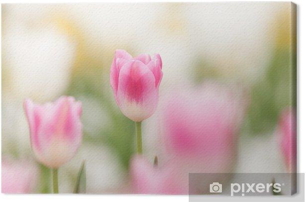 Cuadro en Lienzo Campos del tulipán - Flores