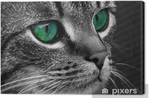 Cuadro en Lienzo Cat3 - Temas