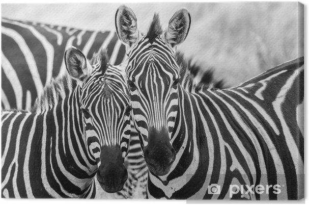 Cuadro en Lienzo Cebras en amor - Temas