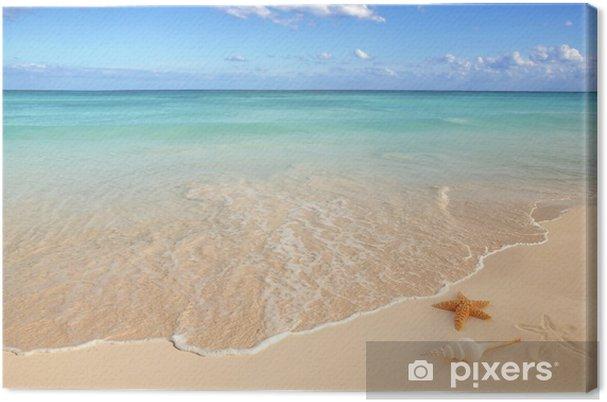 Cuadro en Lienzo Conchas de mar estrella de mar turquesa del Caribe tropical de arena - Temas