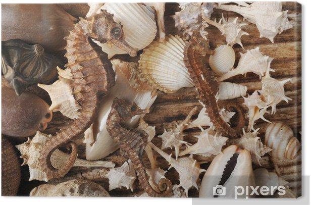 Cuadro en Lienzo Conchiglie - Animales marinos