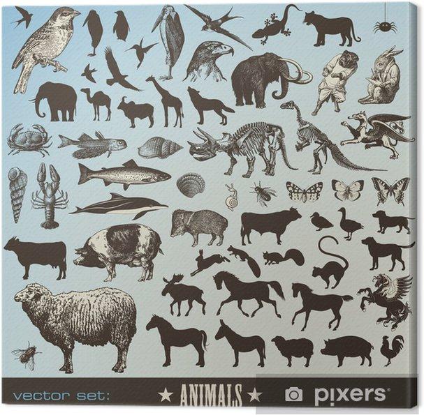 3d5769e48f1f Cuadro en Lienzo Conjunto de 60 ilustraciones de animales detallados y  siluetas de animales