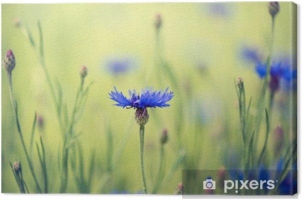 Cuadro en Lienzo Cornflowers - Acianos