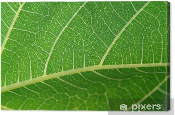 Cuadro en Lienzo Detalle de la hoja - Plantas